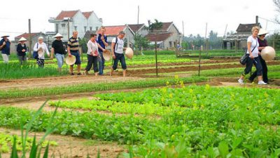 Trà Quế Vegetable Village tourist attraction